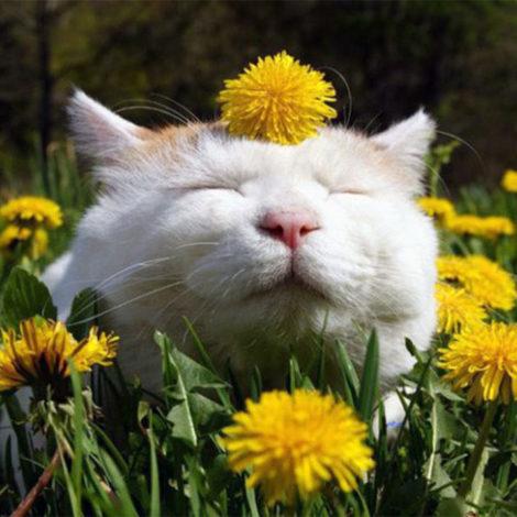 Moka Mixtape ::: Le bonheur…